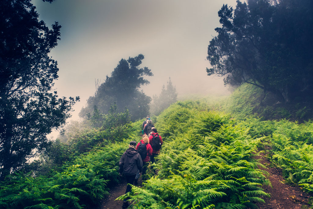 Miniguía Tenerife: senderismo en la naturaleza