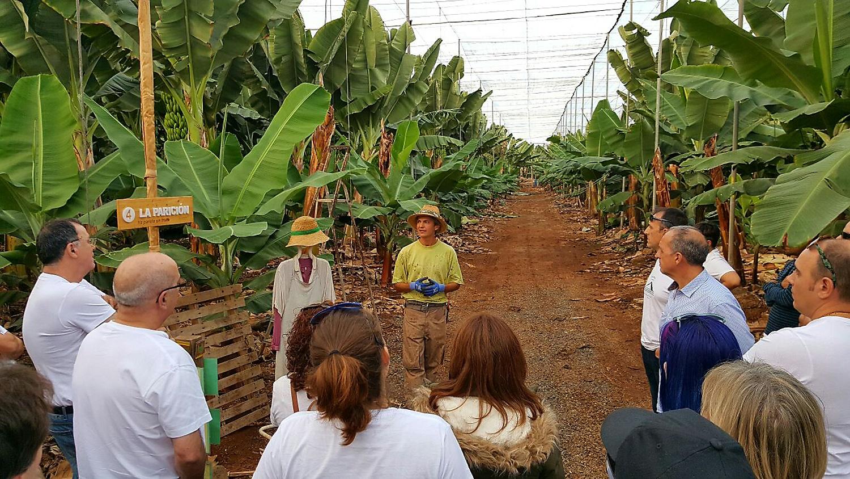 Miniguía Tenerife: actividades para conocer la naturaleza