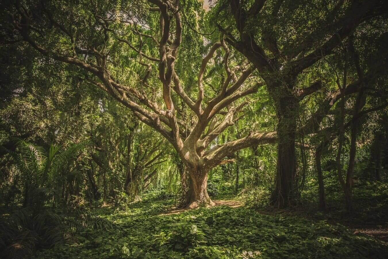 Los sonidos de la naturaleza en el bosque
