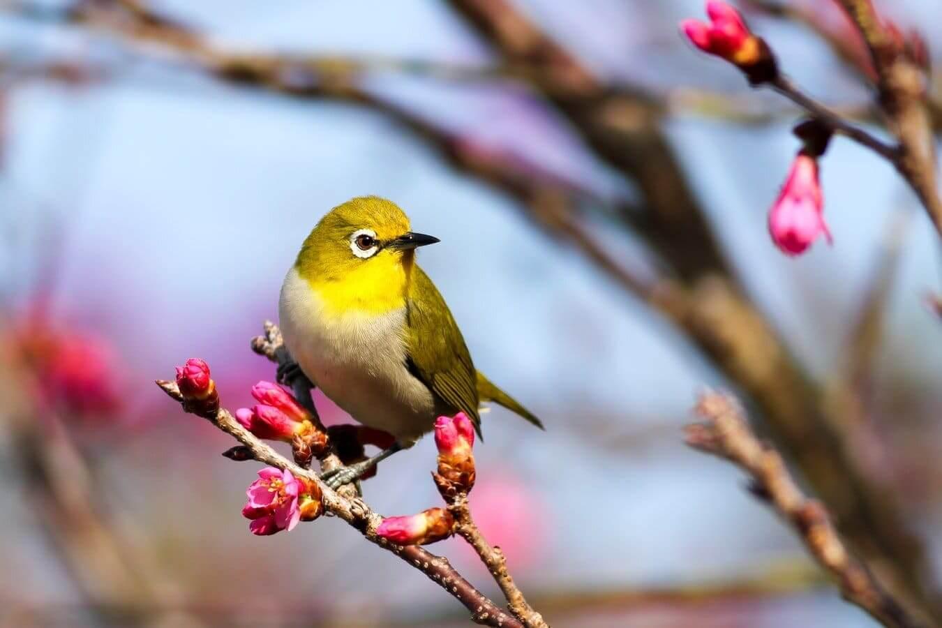 Los sonidos de la naturaleza en el canto de los pájaros